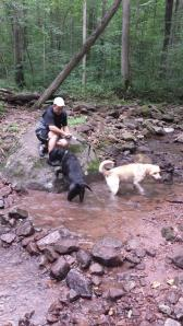 Hiking is a great way to take a breather with your dogs.